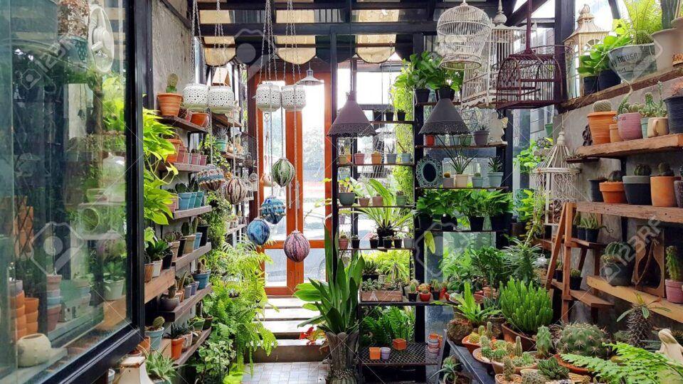 Plantas que precisam de pouca luz para começar o seu jardim