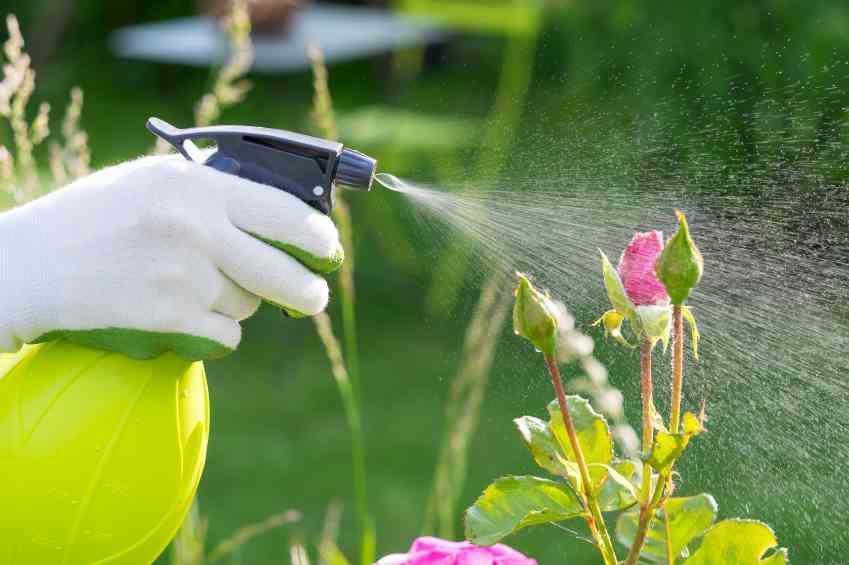 Borrifar água nas plantas: ajuda a aumentar a umidade do solo?