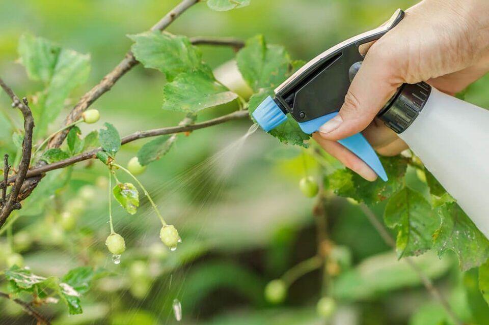 Borrifar água nas plantas – Como regar e aumentar a umidade do solo