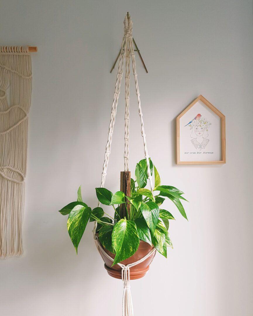 Como plantar jiboias: saiba os cuidados para ter essa planta na sua casa