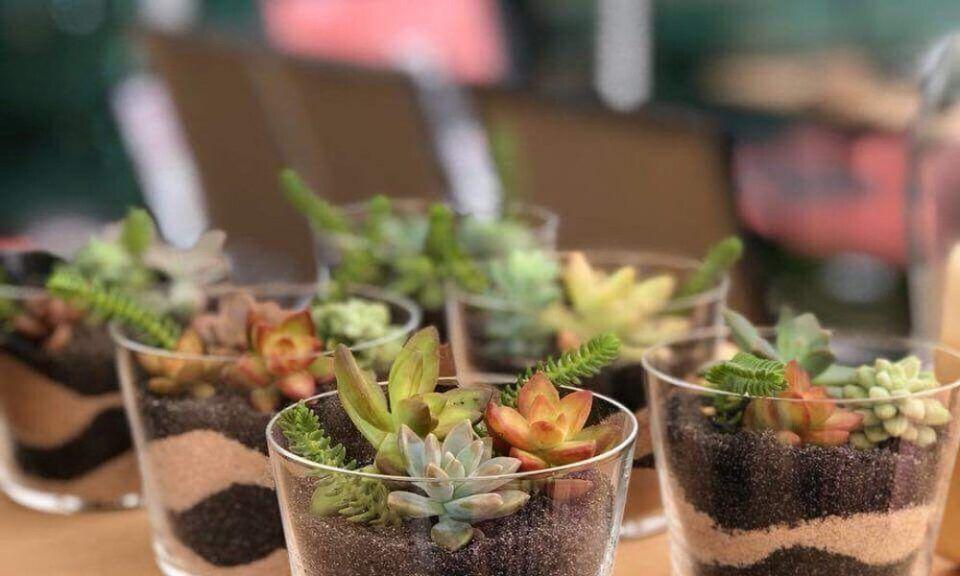 Como plantar suculentas – Dicas de como manter e cultivá-las em casa