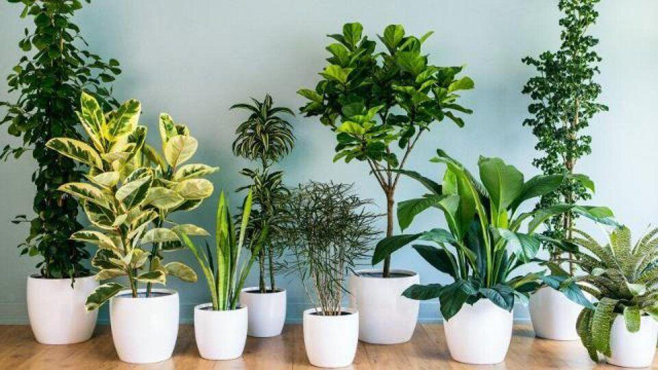 Meia-sombra – Tipos de plantas para ambientes internos e características