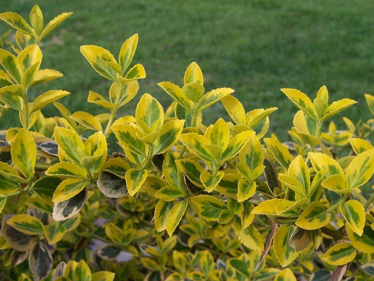 Plantas resistentes a sol: as melhores opções para o jardim
