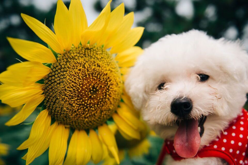 Plantas tóxicas para os pets – Principais espécies e como evitar