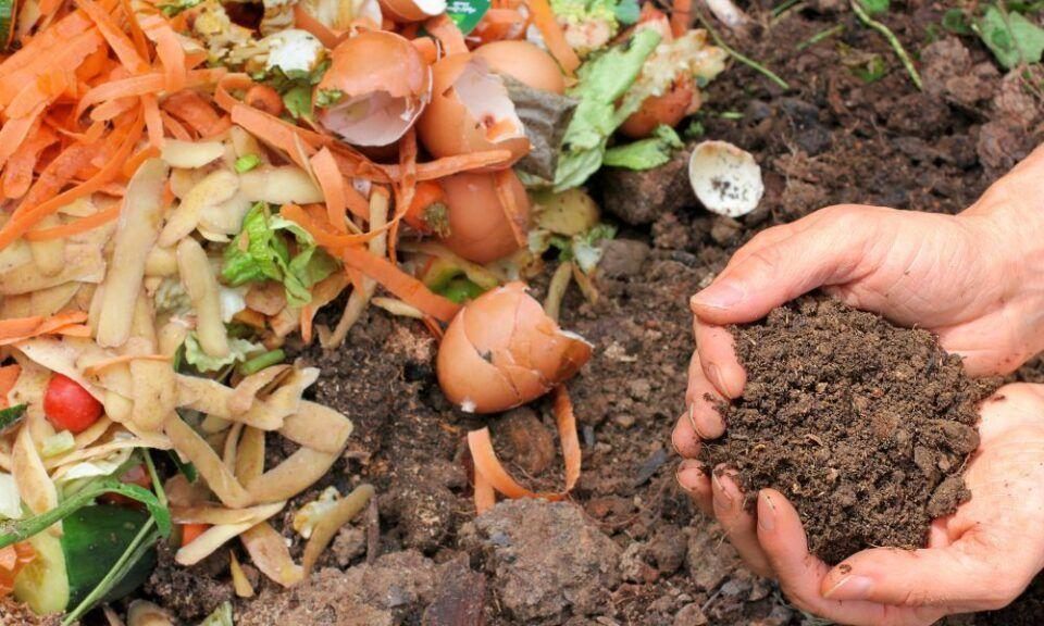 Casca de ovo nas plantas – Formas de utilizar o adubo orgânico