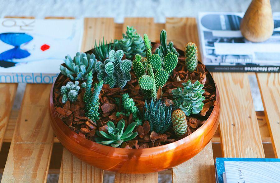 Como plantar: dicas de plantio para quem está aprendendo a plantar