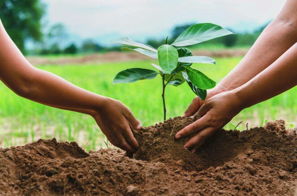 Como plantar? Técnicas de plantio e sugestões de plantas fáceis de manter