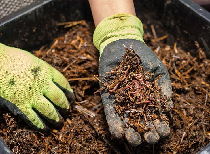 Composteira doméstica: aproveitando os resíduos orgânicos da cozinha
