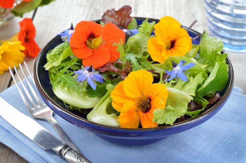Flores comestíveis – Características e opções para incluir na alimentação