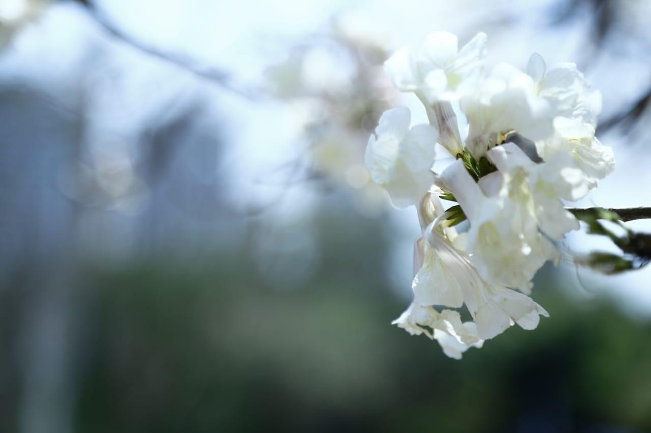 Flores comestíveis: conheça flores que podem fazer parte da alimentação