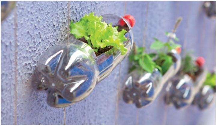 Horta suspensa: como reaproveitar materiais e montar uma horta