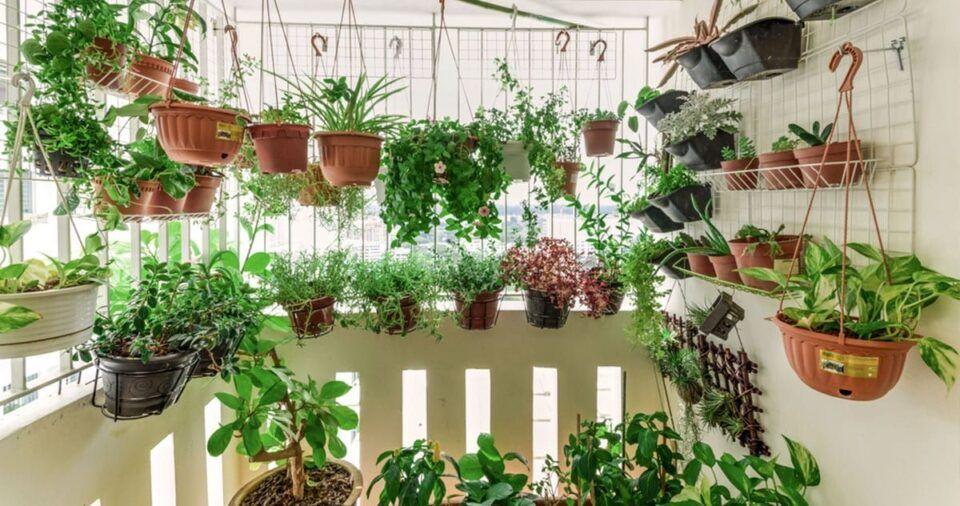 Horta suspensa – Maneiras de reaproveitar materiais e montar uma horta