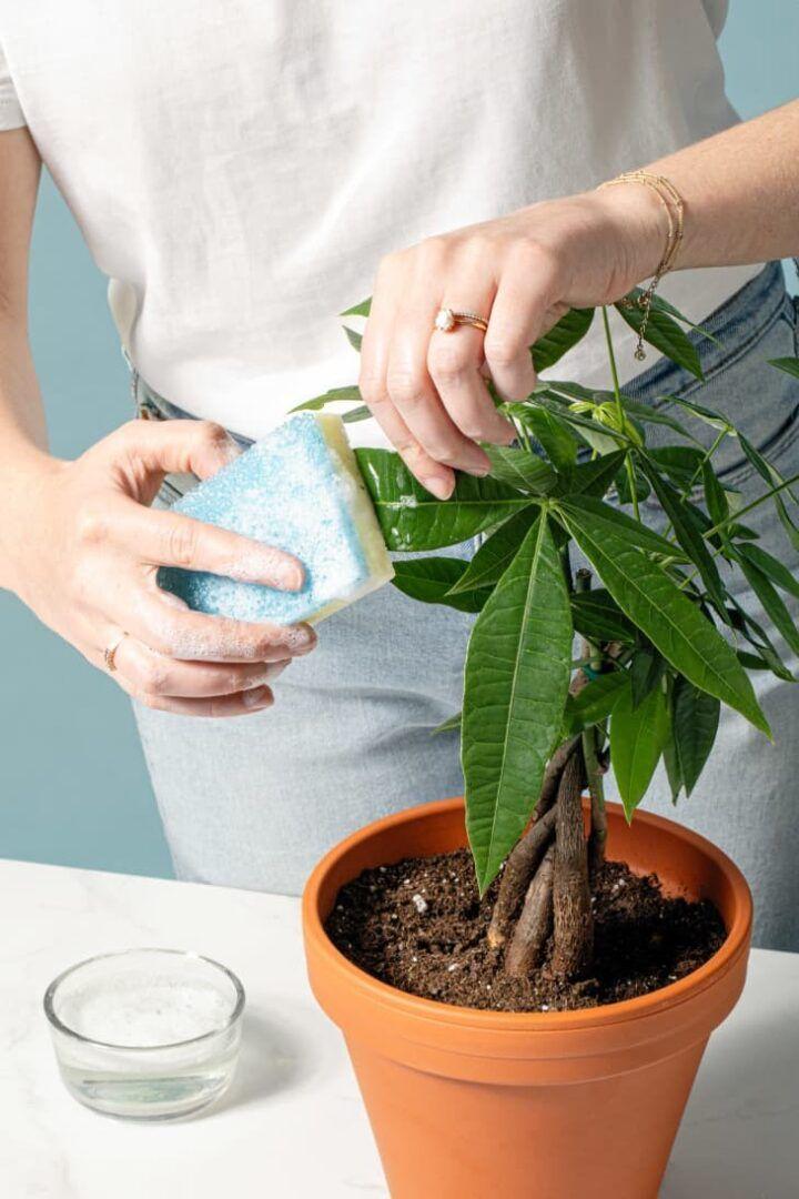 Limpar as folhas das plantas: dicas de como tirar a poeira das folhas