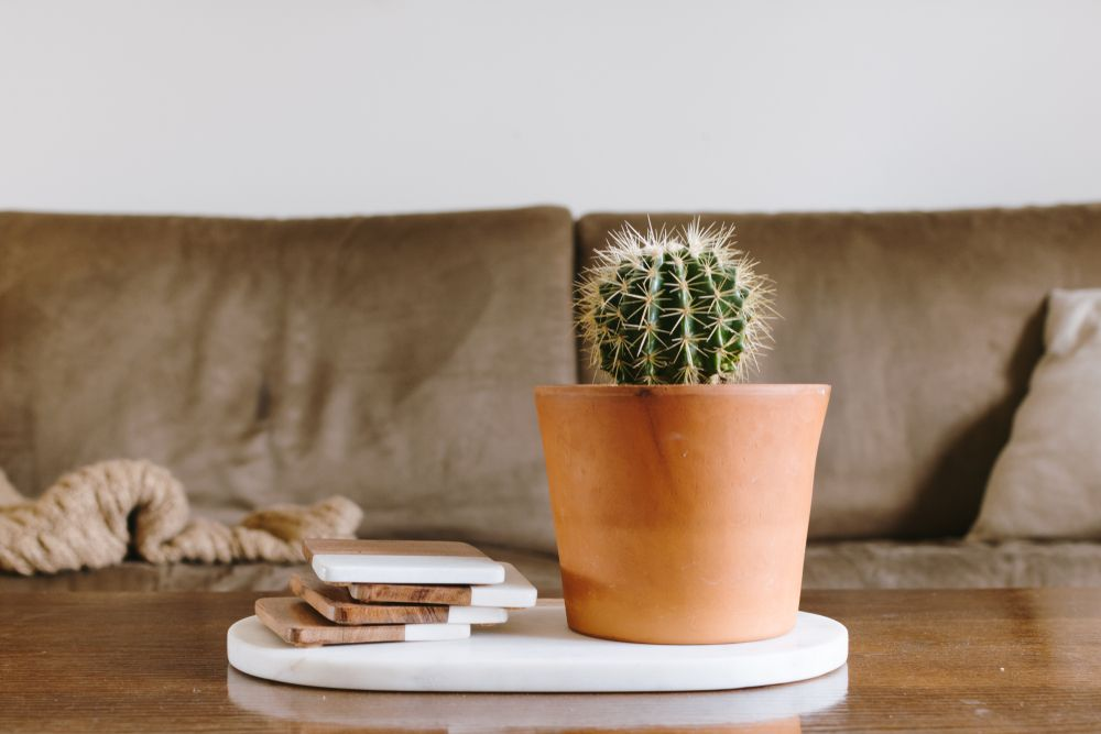 Plantas em casa: benefícios, cuidados e espécies fáceis de cultivar