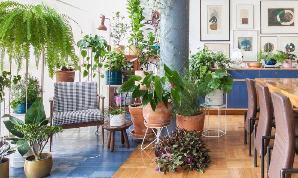 Plantas em casa – Benefícios, cuidados e espécies fáceis de cultivar