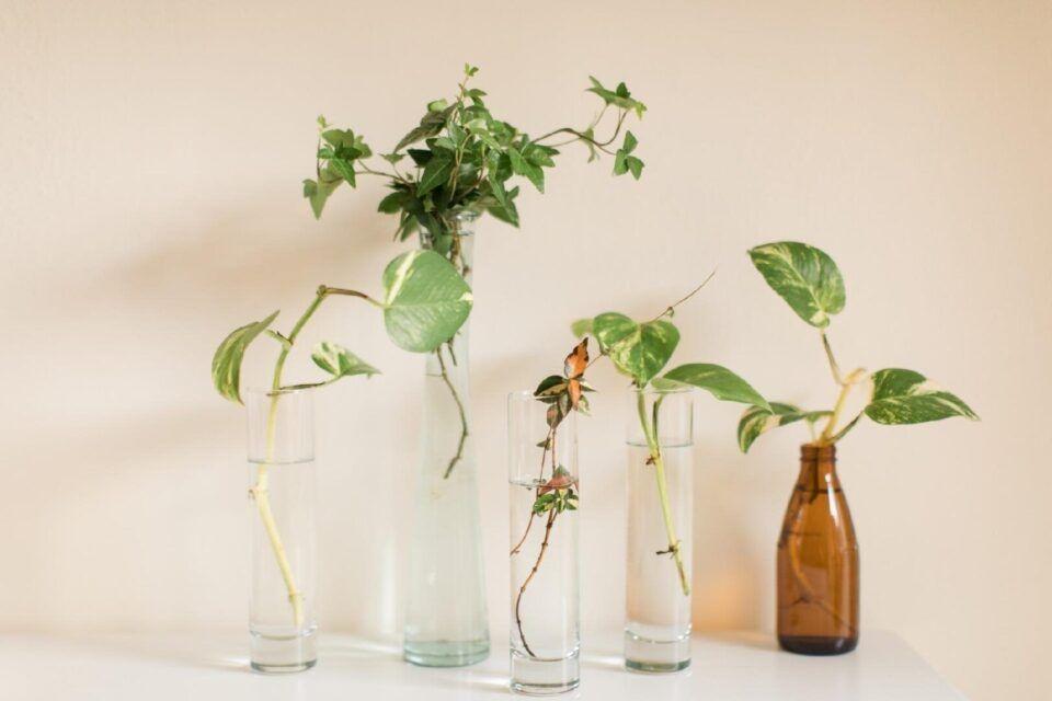 Plantas na água – Tipos, cuidados e dicas de como usá-las na decoração
