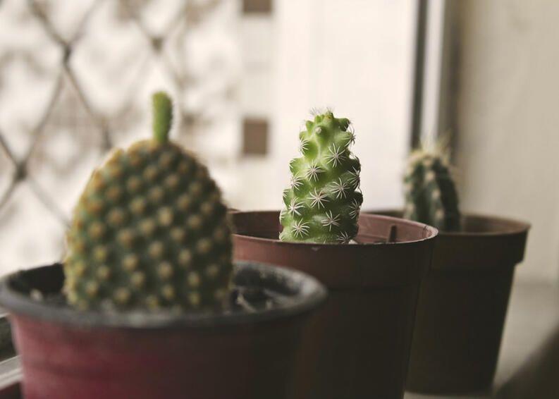Plantas ornamentais: as melhores escolhas para cada ambiente