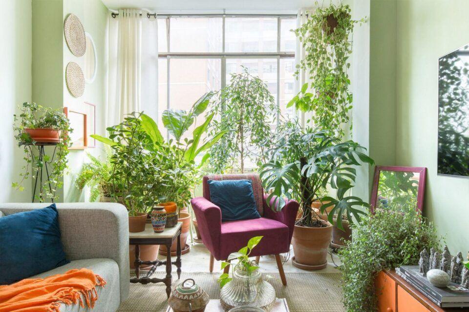 Plantas ornamentais – Opções de espécies para cada tipo de ambiente