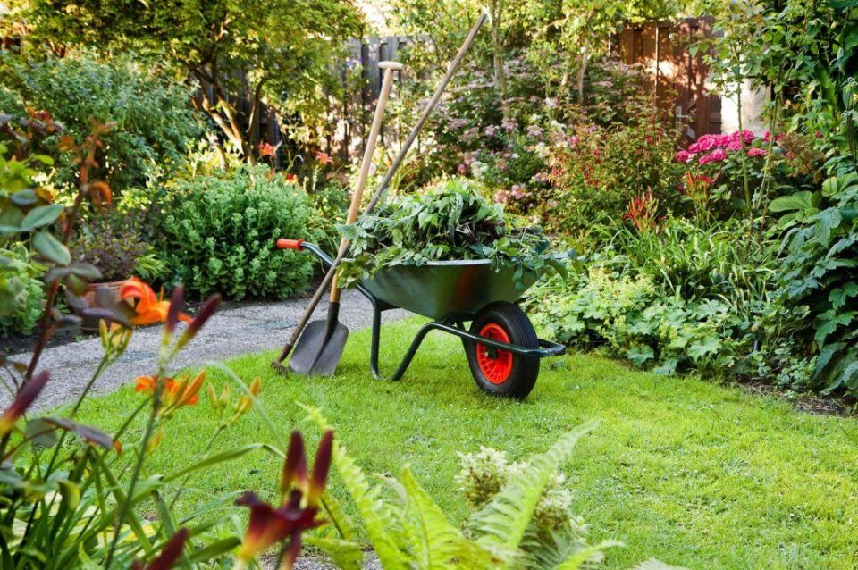 Plantas para jardim – Opções de espécies para diferentes espaços