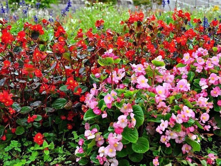 Plantas rasteiras: espécies fáceis de cultivar no quintal ou decorar o jardim