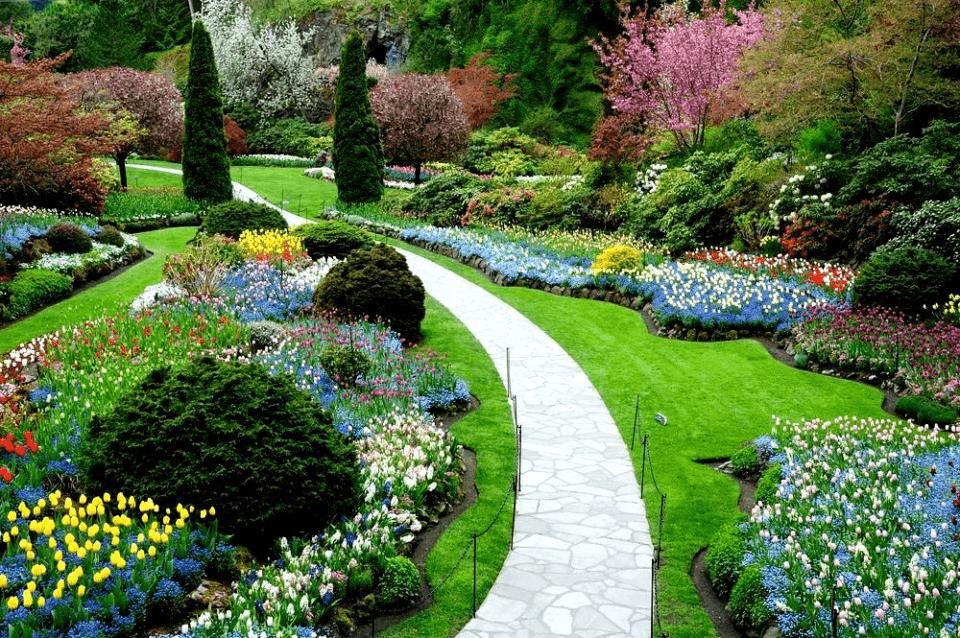 Plantas rasteiras – Espécies para cultivar no quintal ou decorar o jardim