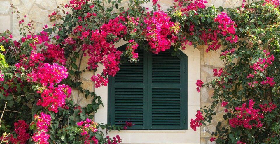 Trepadeiras – Plantas para decoração de pergolados, muros e cercas