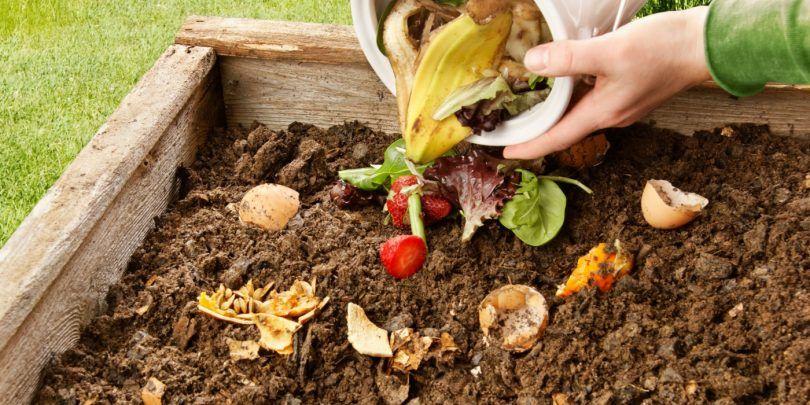 Bicarbonato de sódio nas plantas: dicas de como usar no jardim