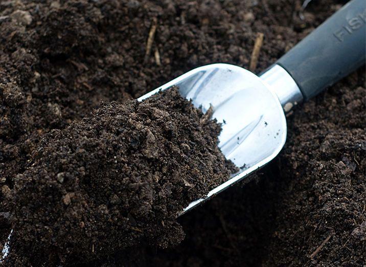 Como cuidar de samambaia: os cuidados para manter a planta saudável
