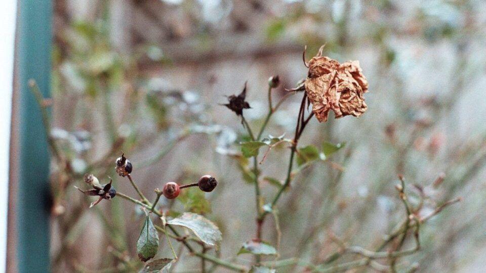 Como recuperar plantas secas – Passo a passo para salvar uma planta