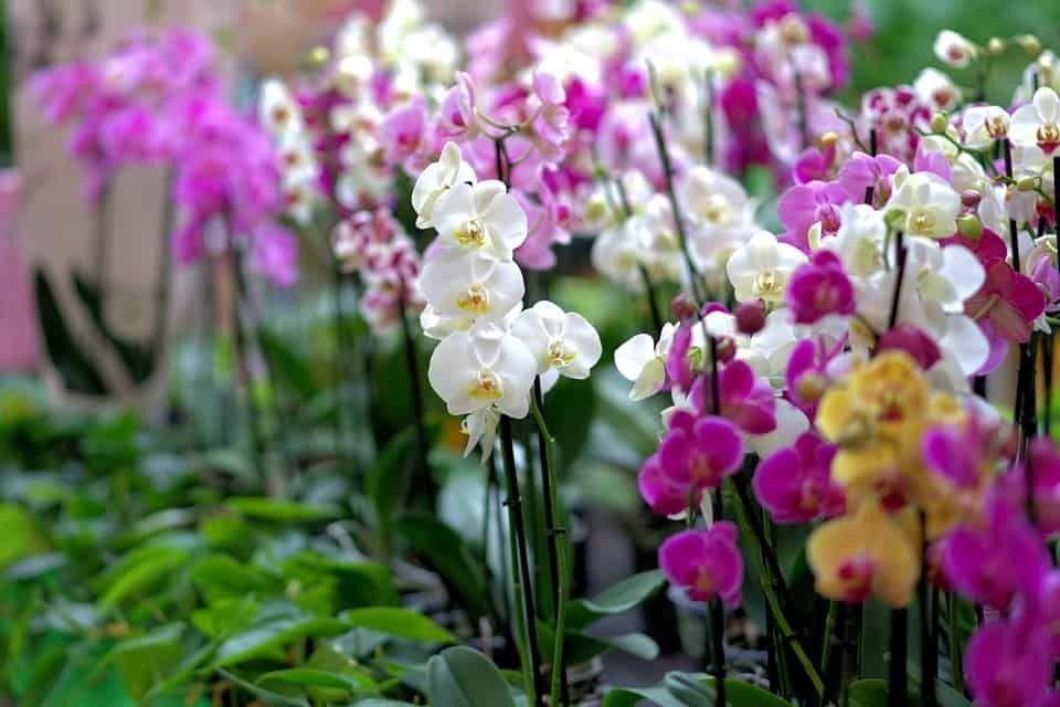 Flores para presentear: escolhendo as espécies de acordo com significado