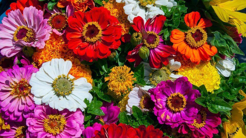 Flores para presentear – Escolhendo espécies de acordo com significado