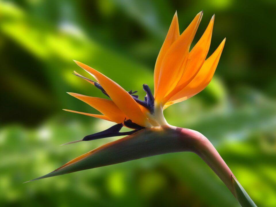 Nomes de plantas – Espécies com nomes diferentes e o que significam