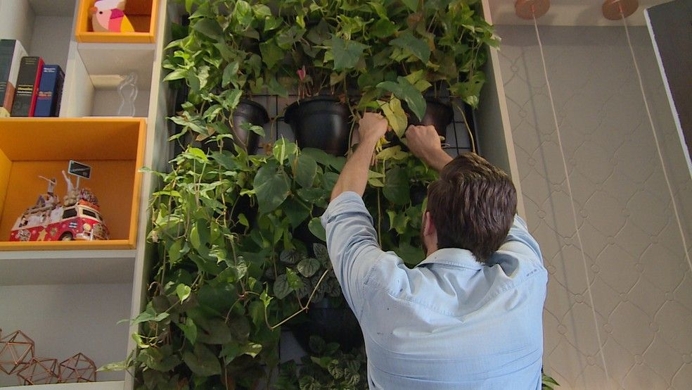 Parede verde: como montar um jardim vertical, cuidados e benefícios