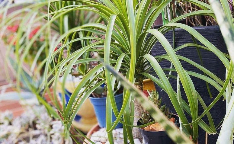Plantas bonitas: espécies belíssimas e dicas de como mantê-las