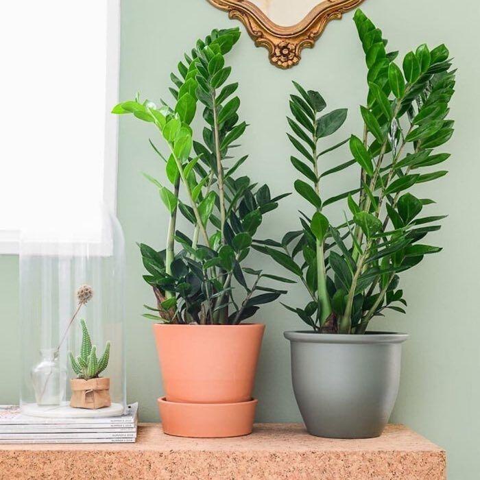Plantas de interior: dicas de espécies para ambientes internos