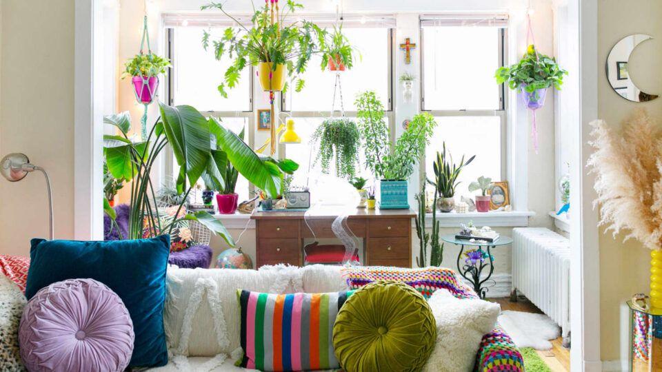 Plantas de interior, o que são?  Dicas de espécies para ambientes internos