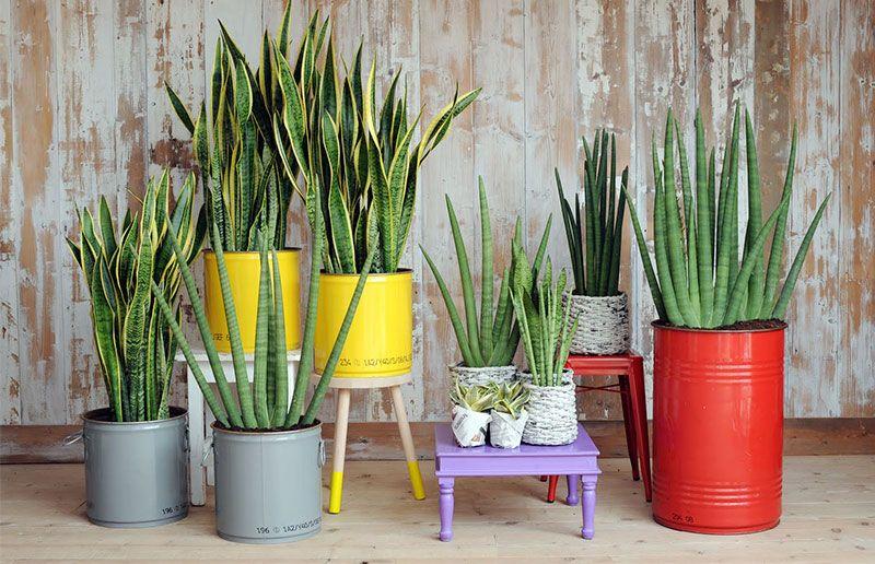 Plantas fáceis de cuidar: lista de algumas espécies para ter em casa