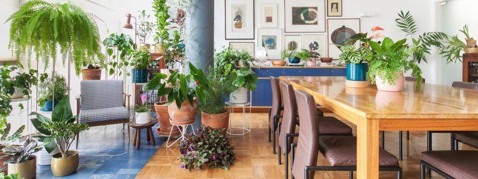 Plantas fáceis de cuidar – Lista de diferentes espécies para cultivar