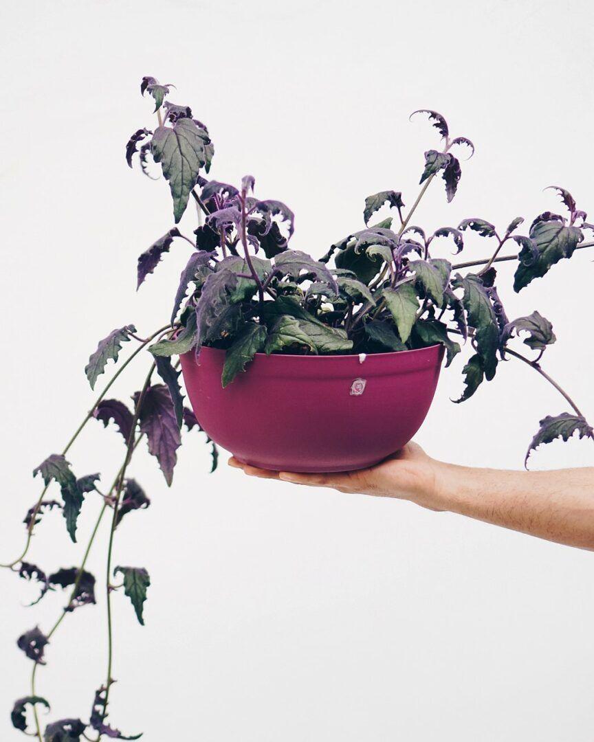 Plantas para apartamento: opções para decorar ambientes internos