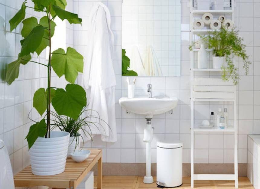 Plantas para banheiro – Espécies para decoração do ambiente interno