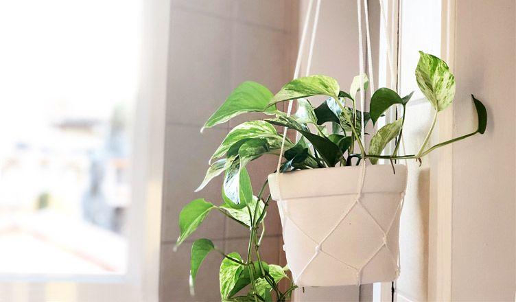 Plantas para banheiro: espécies para a decoração desse ambiente