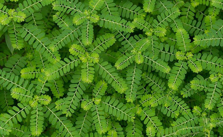 Tipos de plantas: conheça o Reino Plantae e algumas espécies de plantas