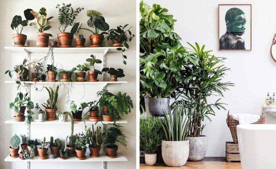 Tipos de plantas, quais são? Reino Plantae e algumas espécies de plantas
