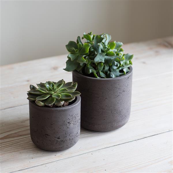 Tipos de vasos de plantas: como escolher e os materiais mais comuns