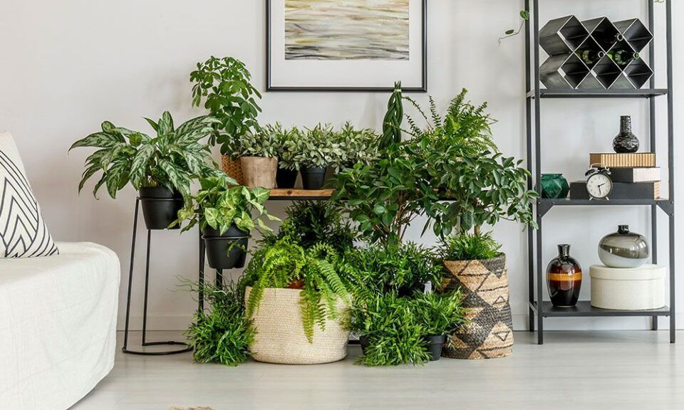 Tipos de vasos de plantas – Materiais mais comuns e como escolher