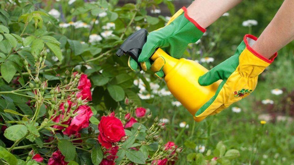 Bicarbonato de sódio nas plantas – Maneiras de usar o composto no jardim