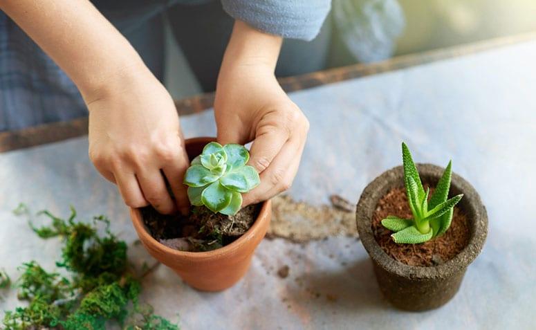 Como fazer mudas: passo a passo de como criar mudas de plantas