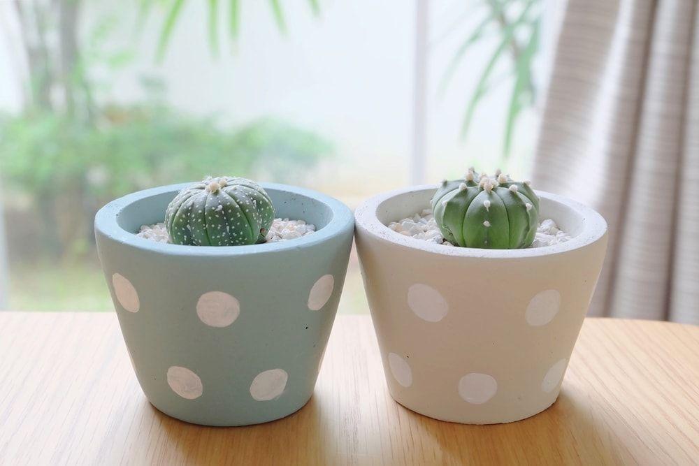 Como plantar em vaso: passo a passo de como fazer o plantio