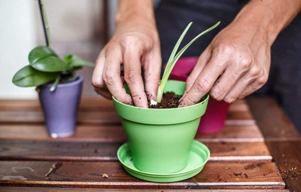 Como plantar em vasos – Passo a passo de como fazer o plantio