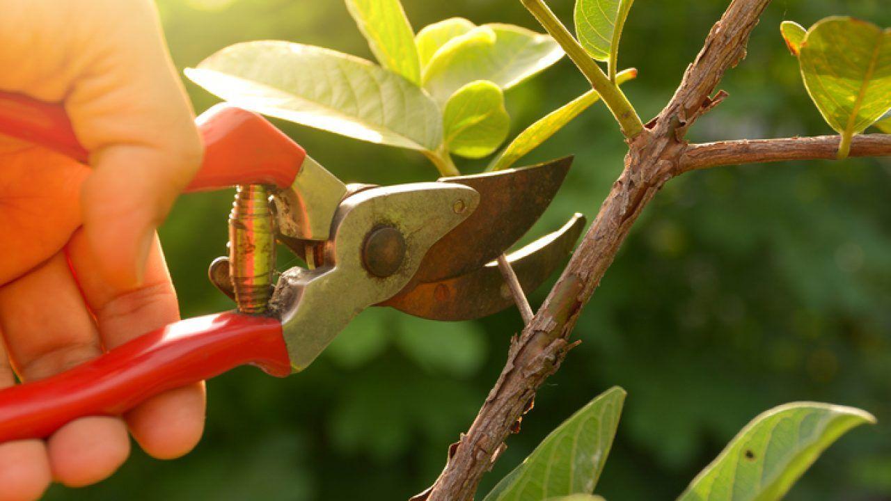 Como plantar maracujá: fazendo o cultivo da fruta em casa